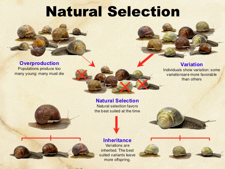 Color By Number Natural Selection
